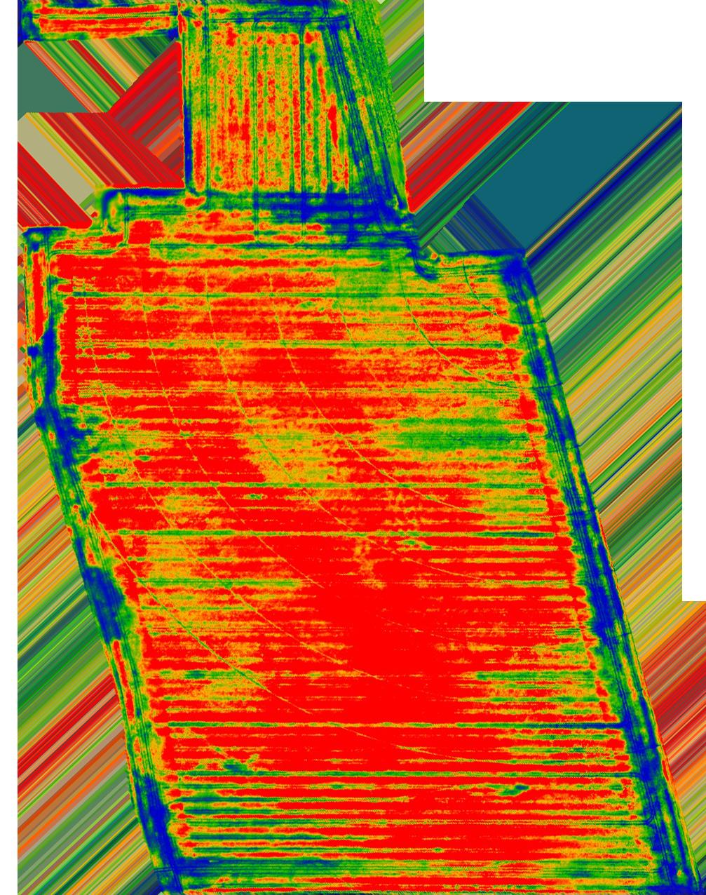 Colza biomasse – entrée hiver